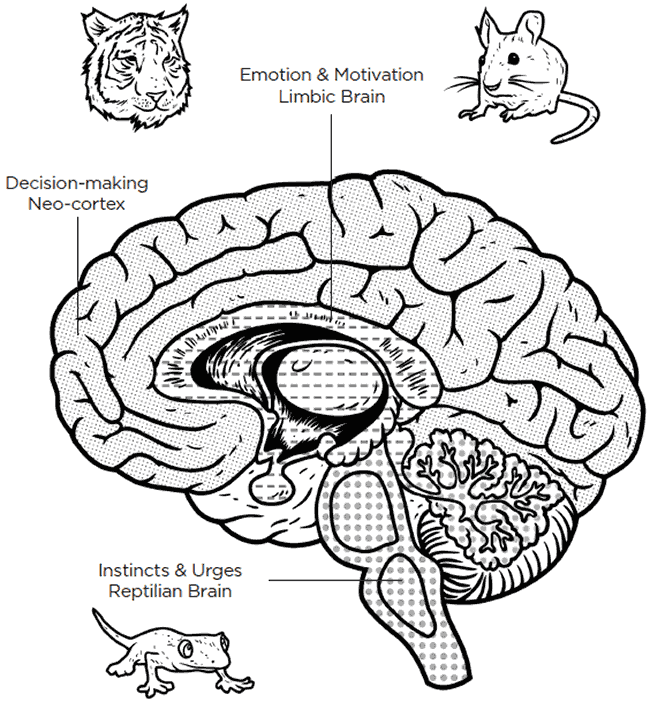 brain: decision, emotion and instincts