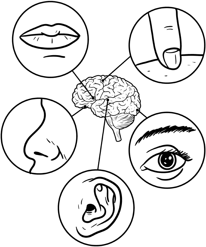 brain in centre and circles with 5 senses around it