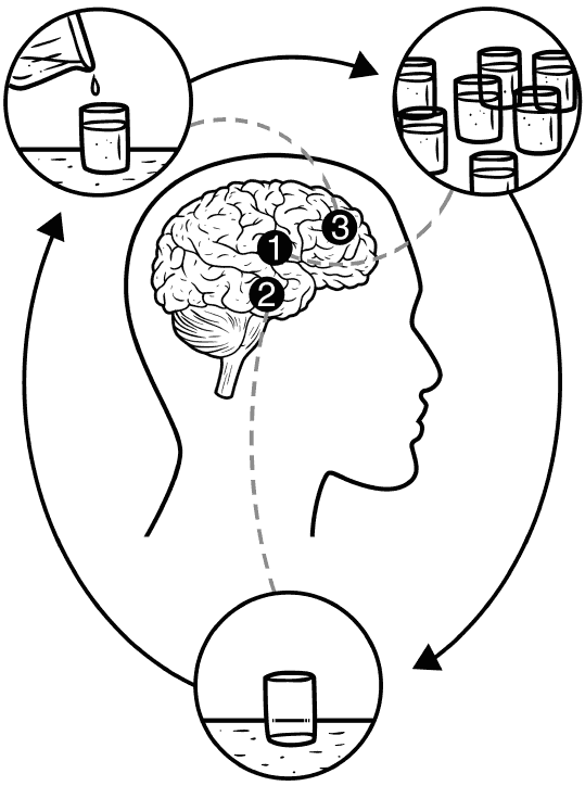 brain with circles showing different amounts of alcohol