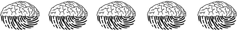 brains divider